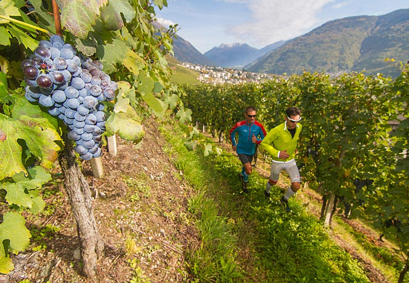 10_wine_races_Valtellina_Wine_Trail