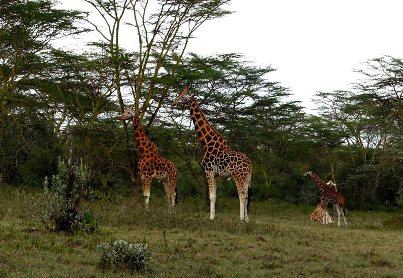 kenya_notes_2_2