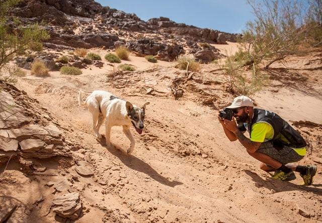 Собака по имени Кактус: главный герой 34-го Marathon des Sables