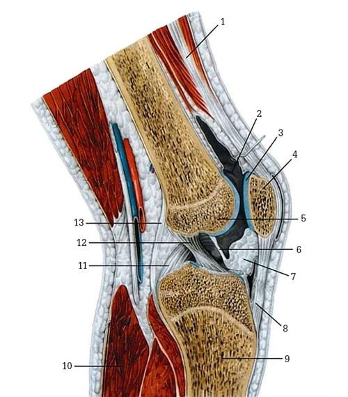 Как защитить суставы от разрушения