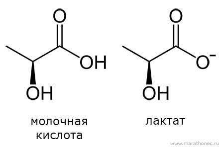 Что такое молочная кислота и лактат